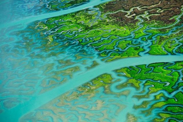 پوشش گیاهی جالب در نقاطی در سواحل اسپانیا