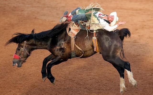 نمایش اسب رانی