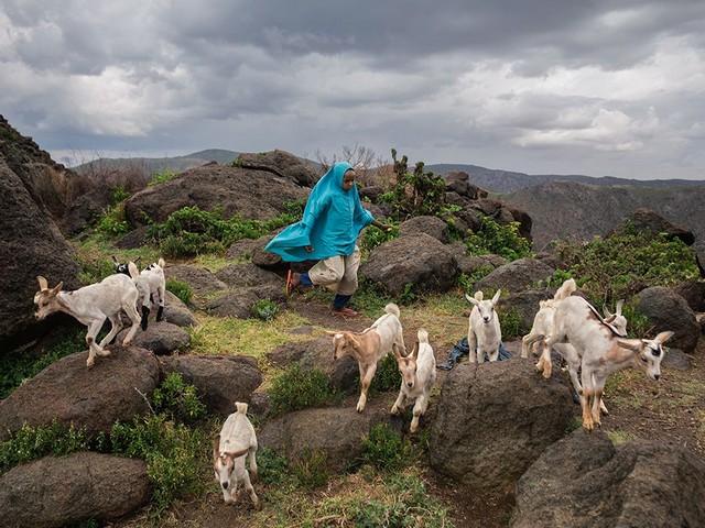 چوپان نوجوان سومالیایی
